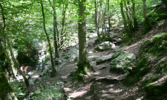 Hikes in the Ardennes with Ardennes-Etape